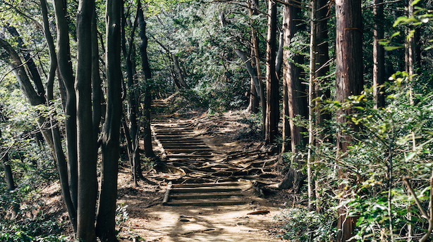 Photo of Pathway Surrounded by Trees